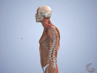 san francisco posture doctor
