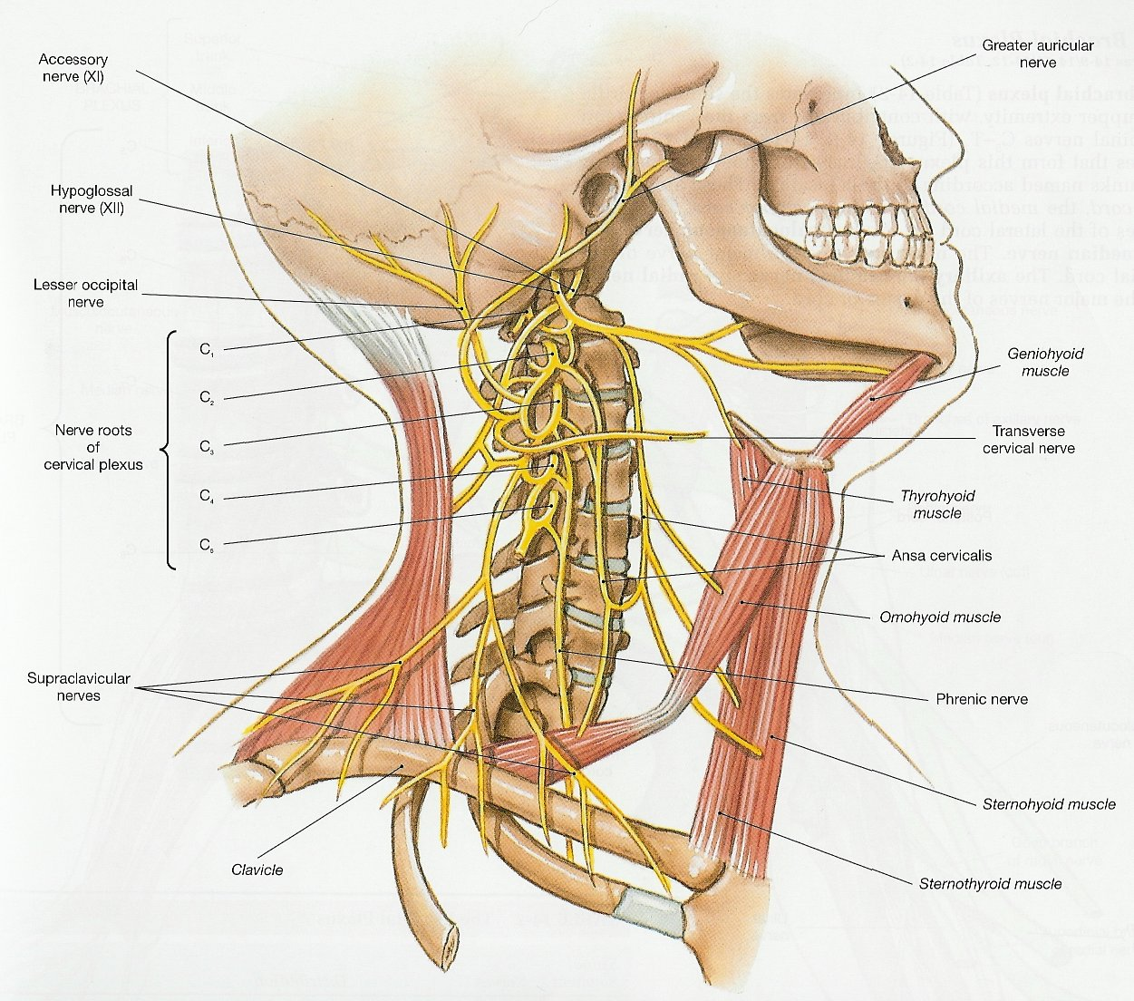 The Neck And Headache Connection San Francisco Chiropractor Blog