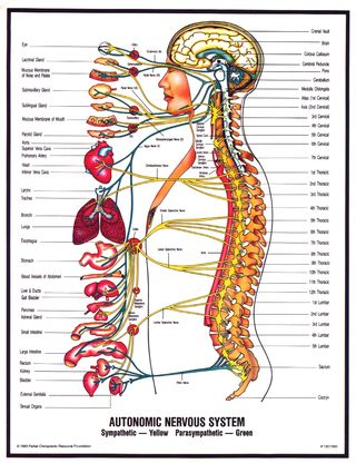 Nervous-system-san-francisco