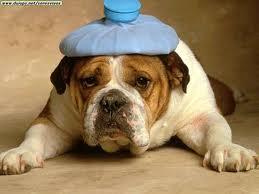 Neck pain and headaches san francisco